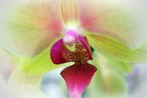 Blütentraum by Uwe Biere
