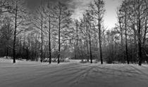 Spuren in den Wald von Uwe Biere