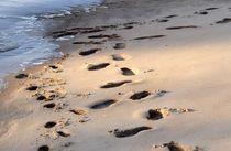 gemeinsam am Strand by Irmtraut Prien