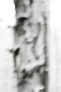 baumbild no8 von Jan Kling