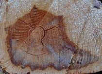 Muschel von alana