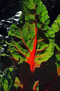 Blatt mit roten Rippen by rubyred