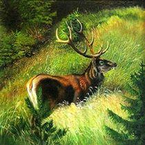 Rothirsch by Veronika Gessl