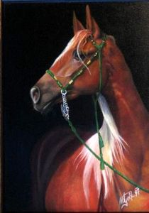 Vollblut Araber by Veronika Gessl