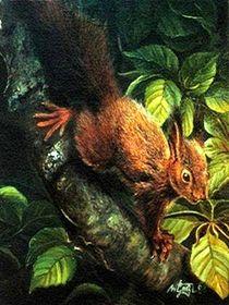 Eichhörnchen von Veronika Gessl