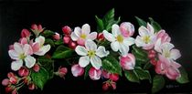 Lederapfelblüten by Veronika Gessl