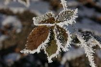 Winterstimmung von bxbchxb ncnvcn