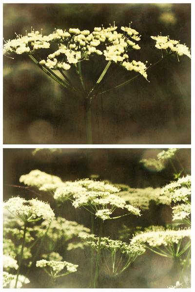 Summer-meadow-sweet-dreams-c-sybillesterk