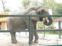 Mein Freund, der alte Elefant