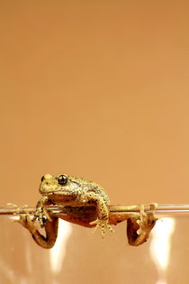 Frosch am Glasrand von Magda Fischer