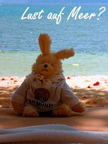 Lust auf Meer? skyo der Hamburg Hase