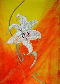 Lilienblüte by Barbara Straessle