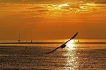 Goldenes Meer von captainsilva