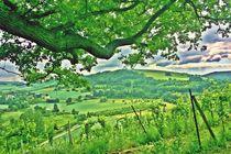 Grüne Heimat von Hans Haller