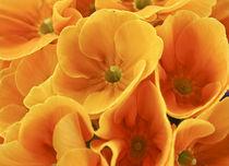 Golden treasure von Mara Bruhn