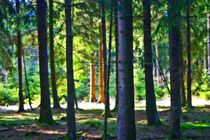 Lichtung im Wald von Hans Haller