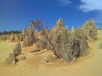 Pinnacles in der australischen Wüste by alinekuhaupt