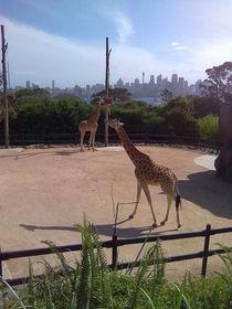 Tierisch Sydney by alinekuhaupt