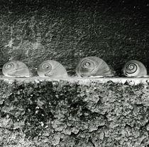 Cockleshells by Arseny Sigarev