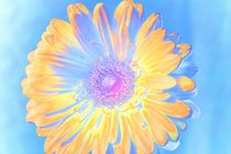 sunshine to you by lucie