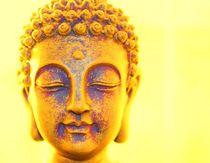 Buddha von lucie