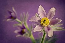 secret spring by magentablue