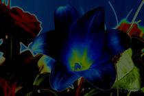 Lilie in Blue von Uwe Hennig