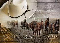 American Quarter Horses von wredefotografie