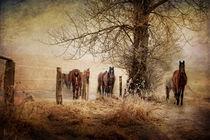 Freiheit by wredefotografie