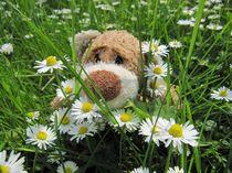 Die Gänseblümchen riechen toll! by Olga Sander