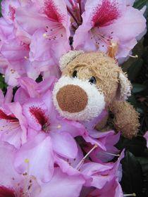 Im Rhododendronbusch von Olga Sander