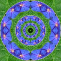 Blaue Trichterwinde1 von Astrid Cordes-Bogatka