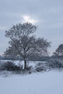 Snowy tree by George Kay