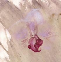 Orchidee von Noel Koehn
