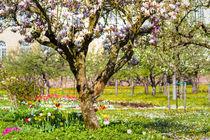 Springtime by Jürgen Klust