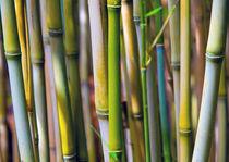 Bambuswäldchen von Jürgen Klust