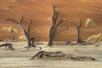 Die toten Bäume in der Namib von Jürgen Klust