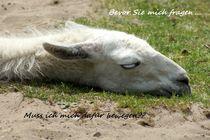 Müde, nicht tot... von Ina Hartges