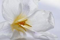 inside white by lightart