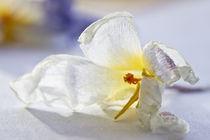 white shine by lightart