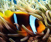 Findet Nemo von tonykaplan