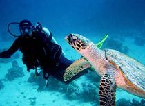 Taucher mit Meersschildkröte von tonykaplan