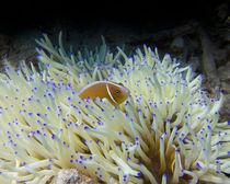 Nemo von qarts