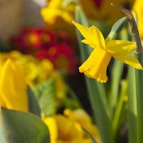Frühlingsgruß by qarts