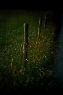 Fence-by-vixygoldustpixy