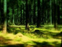 Geisterwald von Ulrike Ilse Brück