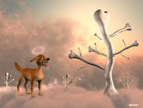A dog in heaven by Soltane Hocine