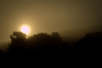 Foggy Sunrise by epiclight