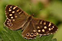 Schmetterling von Christian Dahm