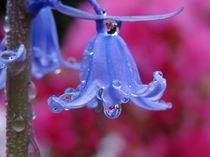 Regentropfen in Lila und Pink von misslu